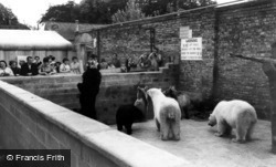 Kirby Misperton, The Bear Pit, Flamingo Zoo Park c.1960