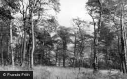 Woodsome Hall Woods c.1950, Kirkburton