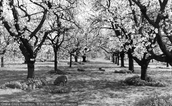 Photo of Langley, Langley Park, The Orchard c.1960