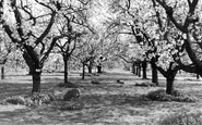 Langley, Langley Park, the Orchard c1960
