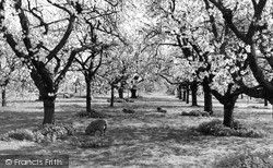 Langley, Langley Park, The Orchard c.1960