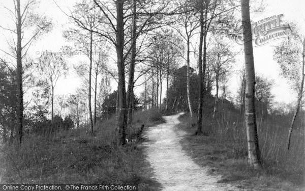 Photo of Ledbury, In Doghill Wood c.1938