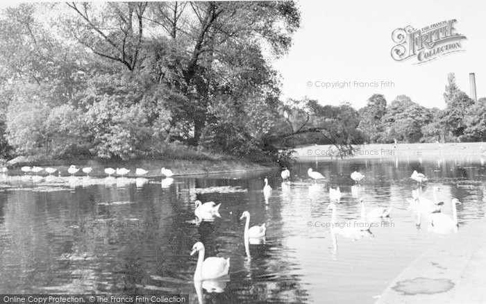 Photo of Leicester, Swans On The Soar c.1955