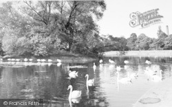 Leicester, Swans On The Soar c.1955