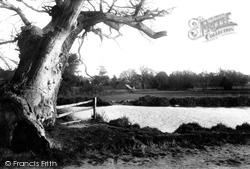 Lexden, Springs 1892