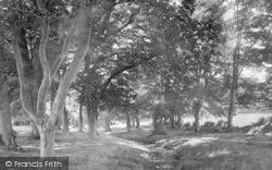 Lexden, Springs 1921