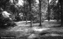 Lickey, The Woods c.1965