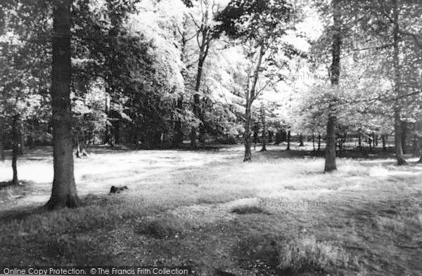 Photo of Lickey, The Woods c.1965