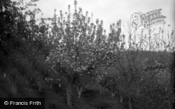 Limpsfield, Caxton Convalescent Home, The Orchard 1947