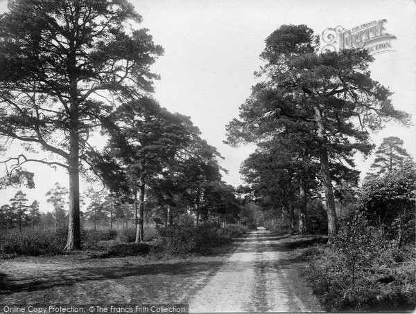 Photo of Limpsfield Chart, The Long Walk 1929