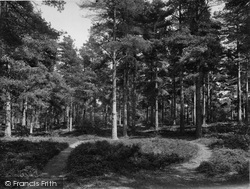The Pine Woods 1929, Limpsfield Chart