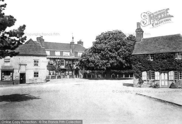 Photo of Liphook, The Horse Chestnut Tree 1901