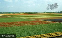 Bulb Fields 1999, Lisse
