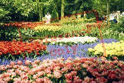 Keukenhof, Flowerbeds 1999, Lisse