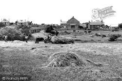 Haymaking c.1955, Llangwnnadl