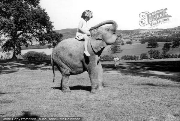Llanerch-Y-Mor, the Zoo c1955