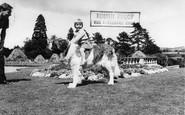 Llanerch-Y-Mor, Zoo, Brandy the St Bernard c1955