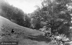 Llyfnant Valley, Near The Falls 1901