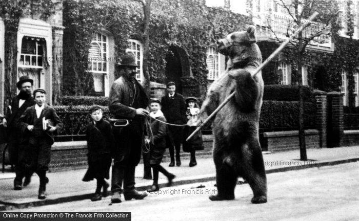 Photo of London, Dancing Bear 1895, ref. L130108