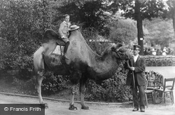 London Zoological Gardens, Bactrian Camel 1913
