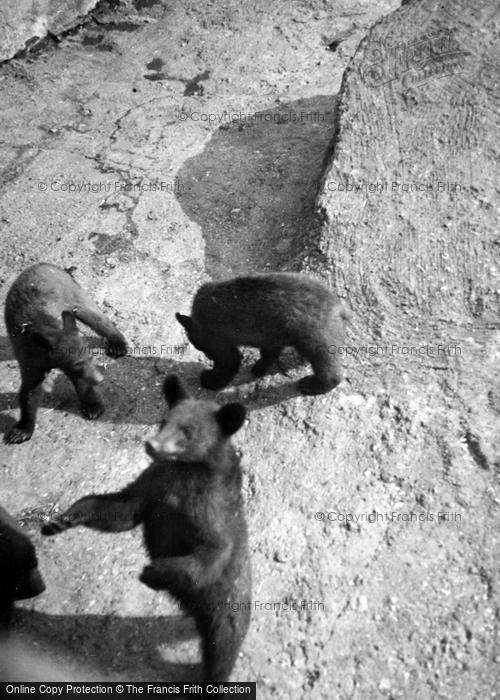 Photo of London Zoological Gardens, Bears c.1935