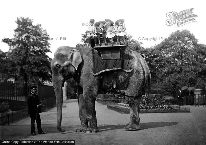 Photo of London Zoological Gardens, Elephant 1913