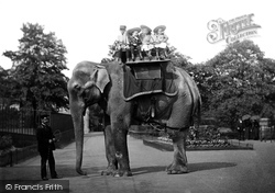 London Zoological Gardens, Elephant 1913