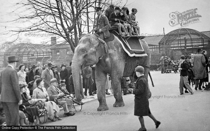 Photo of London Zoological Gardens, Elephant Rides c.1935
