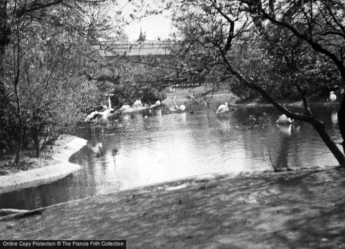 Photo of London Zoological Gardens, Flamingo Pool c.1935