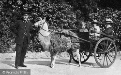 London Zoological Gardens, Llama Cart c.1910