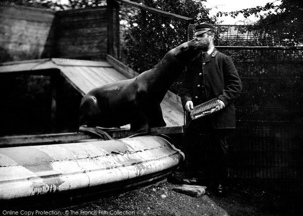 Photo of London Zoological Gardens, Sea Lion 1913