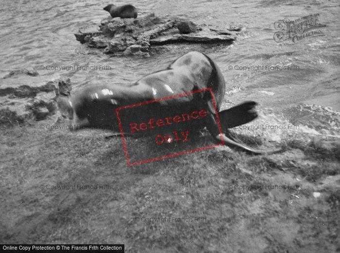 Photo of London Zoological Gardens, Sea Lion c.1935