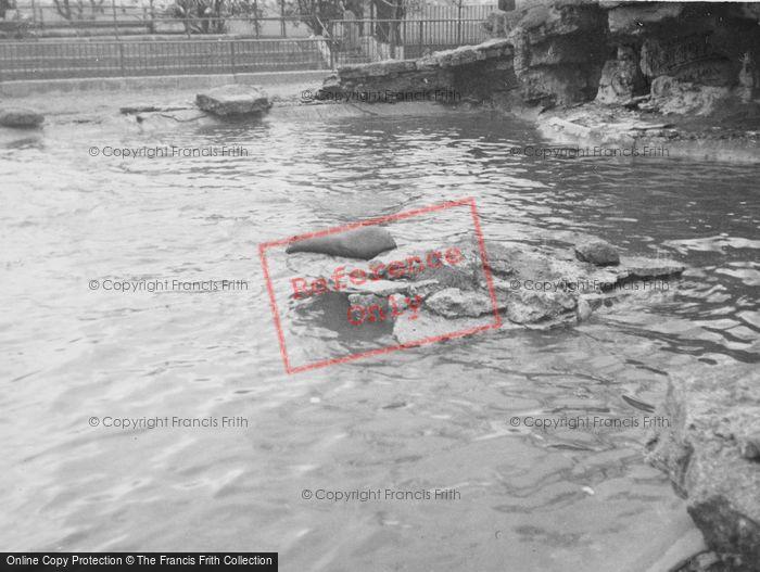 Photo of London Zoological Gardens, Sea Lion Pool c.1935