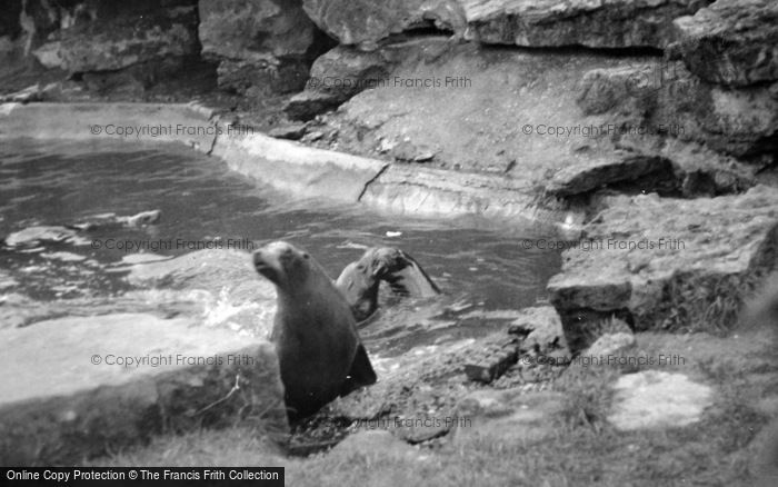 Photo of London Zoological Gardens, Sea Lions c.1935