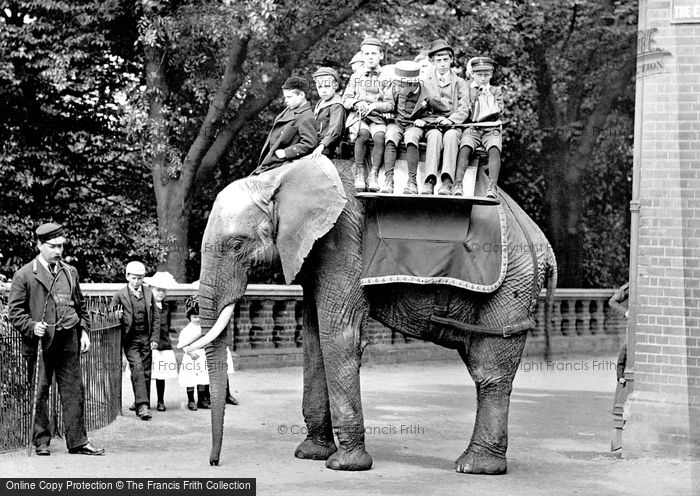 Photo of London Zoological Gardens, The Elephant 1913