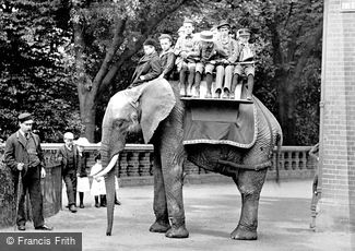 London Zoological Gardens, the Elephant 1913
