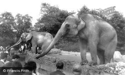 London Zoological Gardens, The Elephant c.1960