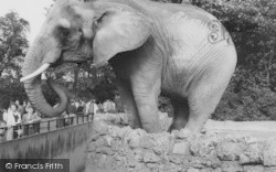 London Zoological Gardens, The Elephant c.1965