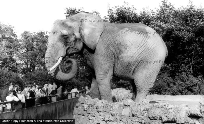 Photo of London Zoological Gardens, The Elephant c.1965