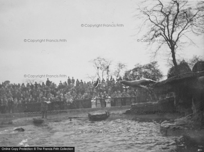 Photo of London Zoological Gardens, The Sea Lion Pool c.1935