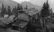 Lucerne photo