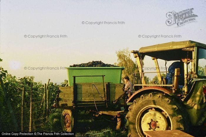 Photo of Ludwigsburg, Tractor Collecting Grapes 1982