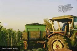 Tractor Collecting Grapes 1982, Ludwigsburg