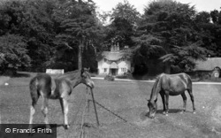 Lyndhurst, Forest Ponies, Swan Green 1923
