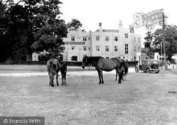 New Forest Ponies c.1955, Lyndhurst