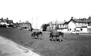 Lyndhurst, Ponies on the Green, Cadnam Road c1955