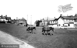 Ponies On The Green, Cadnam Road c.1955, Lyndhurst