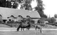 Example photo of Lyndhurst