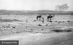 Camels In The Desert 1965, Ma'an