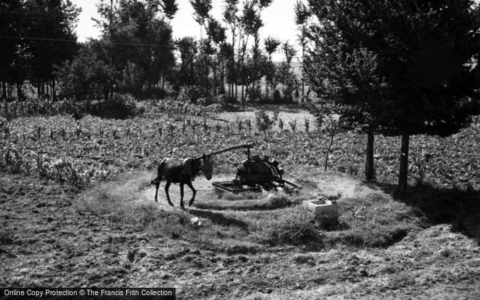 Photo of Madrid, Donkey Operated Water Pump 1960